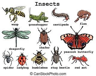 insecten, set