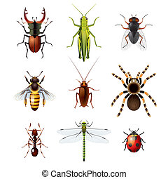 insectes, blanc, ensemble, fond