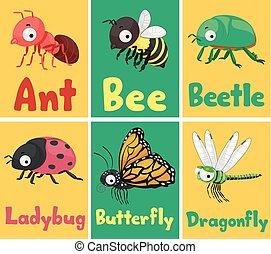 insectes, cartes, flash, illustration