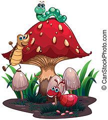 insectes, différent, entouré, champignon