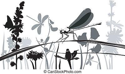 insectes, libellule, papillons