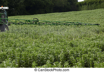 Insecticide spray on green beans