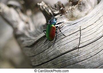 insecto,  colorfull, o, bicho