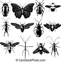 insecto, variedad, vector, silueta