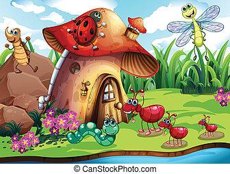 insectos, colonia