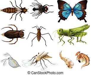 insectos, conjunto, blanco, plano de fondo