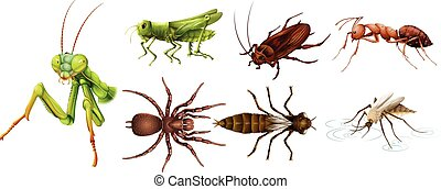 insectos, diferente, Clases