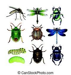 insectos, diferente, conjunto