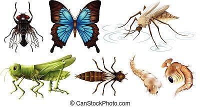 insectos, diferente, tipos