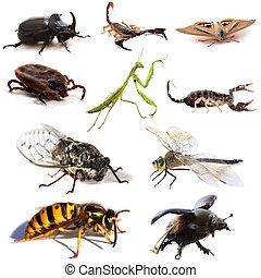 insectos, escorpiones
