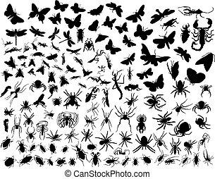 insectos, vector