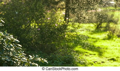 Insects bask on the sunlight after born, natural light,...