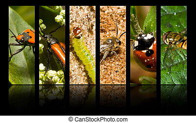 Collection of insects and other invertebrates