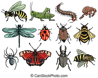 insects - set of illustration of insects