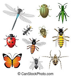 Insects or bugs, vector collection, set of 11 pieces