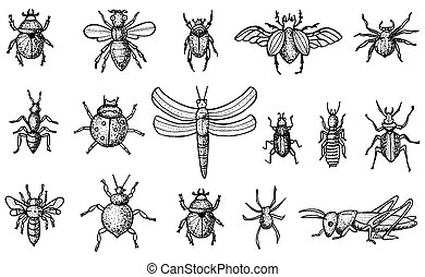 Insects Set with Beetles, Bees and Spiders Isolated on White...