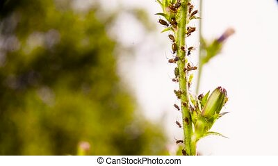 Insects sitting on the stalk of the plant - Macro shooting...