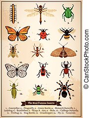 Insects Vintage Book Page