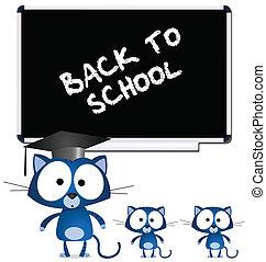 insegnante, gatto