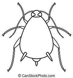 insekt, kontur, aphid
