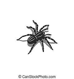 insekt, t�towierung, isometrisch, silhouette, spinne, schatten, form, design, vogelspinne, 3d