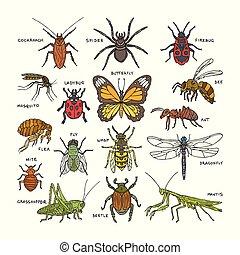 Moskito Marienki Fer Wurm Insekten Lustiges Vektor Clip Arts