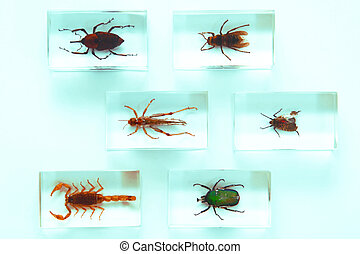 insekten, sammlung
