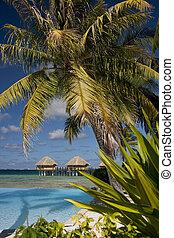 insel, -, französisches polynesien, tropisches paradies