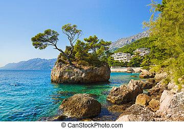 insel, und, bäume, in, brela, kroatien