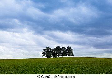 insel, voll, von, bäume, mitte, feld