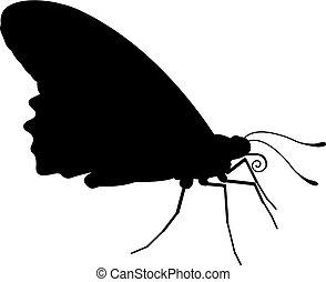 inseto borboleta, silueta, animal