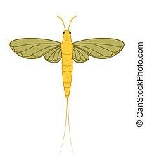inseto, mayfly, ilustração