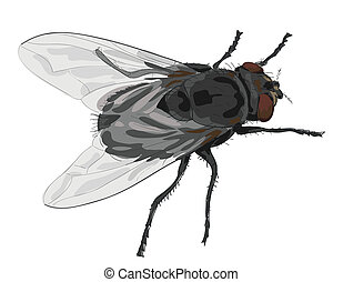 inseto, mosca, isolado, branco, experiência.