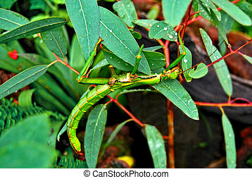 inseto, verde, em, a, folhas
