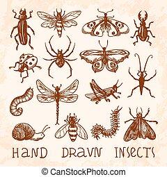 insetos, esboço, jogo