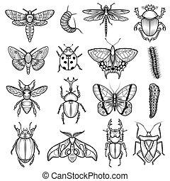 insetos, pretas, linha branca, ícones, jogo