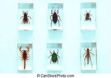 insetti, collezione