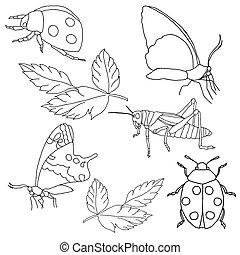insetti, fondo., bianco, set