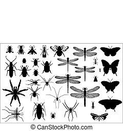 insetti, silhouette, ragni