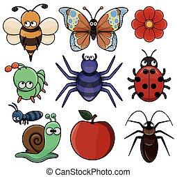 insetto, animale, collezione