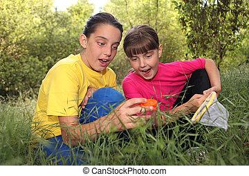 insetto, caccia, in, il, legnhe
