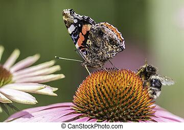 insetto, impollinazione