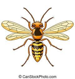 insetto, mascotte, bianco, vespa, cartone animato, fondo