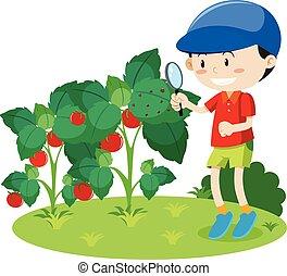 insetto, ragazzo, pianta, ricerca
