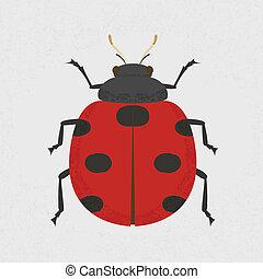 insetto signora
