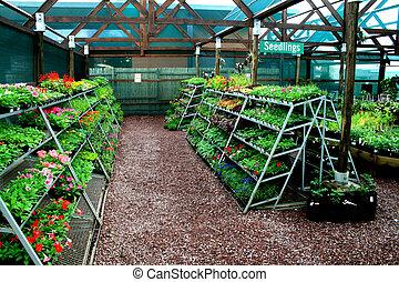 inside a nursery full of plants