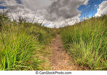 inside a wild path