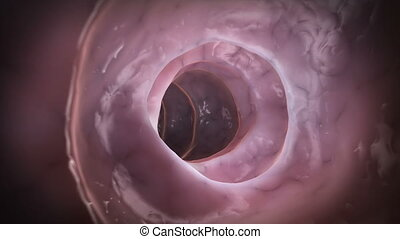 Animation showing the inside of a healthy colon