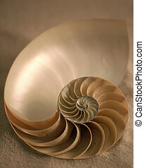 Inside of Nautilus - a sea shell laying on the sand in soft...
