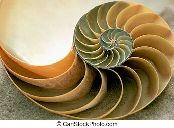 Inside of Nautilus - close-up sea shell laying on the sand